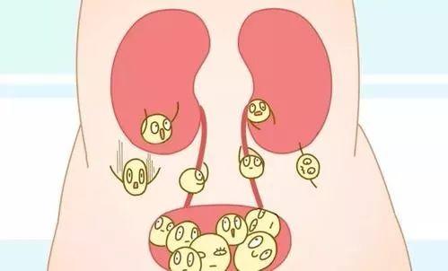 输卵管造影能治疗排卵障碍吗