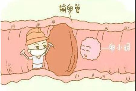 深圳黄贝岭女性检查不孕症检查哪几项